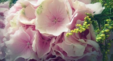 pink hydrengea